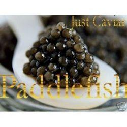 American Paddlefish Caviar – 8.00 oz. / 230 gr. (Free Overnight Shipping!)