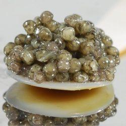 Sevruga Classic Grey Caviar Malossol – 3.2 oz (90 g)